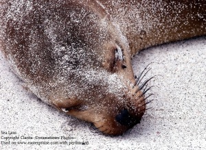Sea Lion--Clarita--Dreamstime Stock Photos