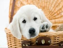 Puppy in a basket 2