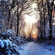 Snowy Peace